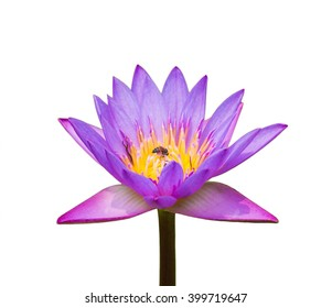 Lotus white background