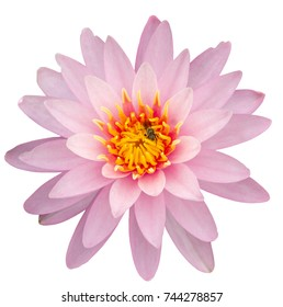 Lotus white background with clipping path