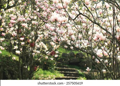 Southern Magnolia Tree Images Stock Photos Vectors Shutterstock
