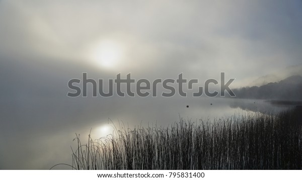 Lough Derg reeds in the early morning winter mist