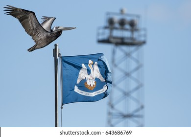 Louisiana State Bird and Louisiana State Flag