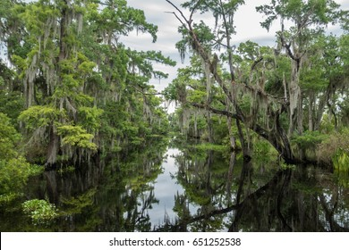 Louisiana swamp with moss covered trees, as viewed from an airboat swamp tour out of New Orleans.