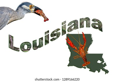 Louisiana Text With State Map, Yellow Crowned Heron, and Crawfish