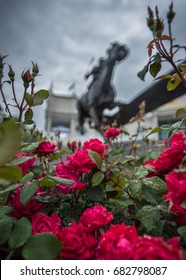 Louisville, United States: May 4, 2017: Wet Roses and Barbaro Statue