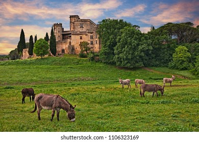 Lourmarin, Provence, France: landscape at dawn of the countryside with the ancient castle and the grazing donkeys