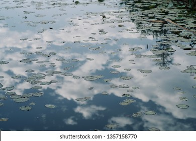Louts leaves and clouds