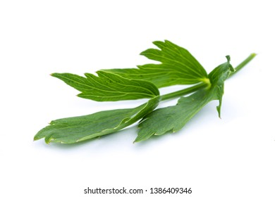 Lovage isolated on white background