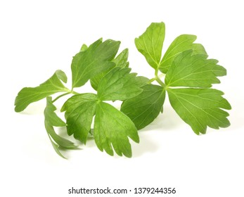 Lovage Leaves on white Background