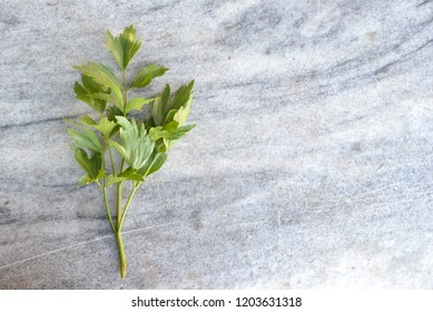 Lovage stem on marble background