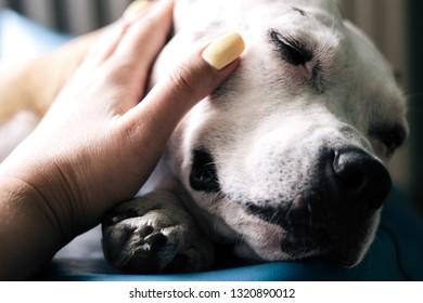 Love between human and dog