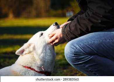 The love between young man and his white siberian husky.