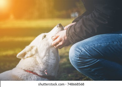 The love between young man and his white siberian husky with the glow of the sun in the corner