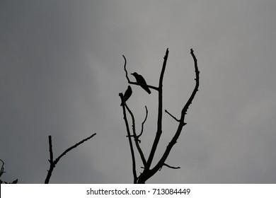 Love Bird at Pokhara - Nepal Annapurna Base camp