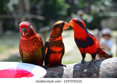 Love Birds Fellas