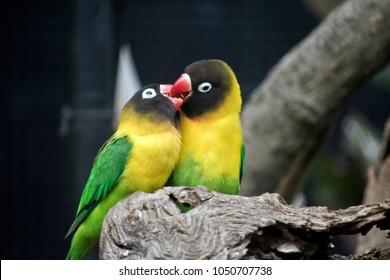 the love birds look like they are kissing