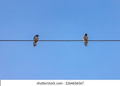 Love of birds, Two little birds on electric cable line, Birds perched on electrical wires with clear blue sky as background.