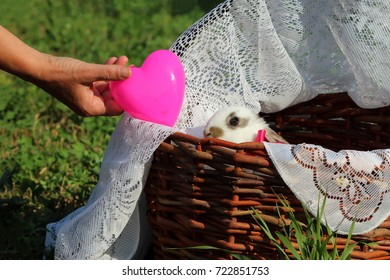 Love and care for your pet. Owner's hand is giving pink heart to little rabbit