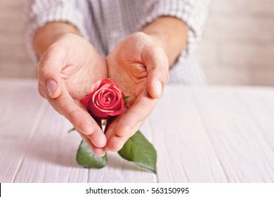 Love concept. Man holding hands like heart with orange rose inside. Valentine's postcard. Women's day. St. Valetine's day.