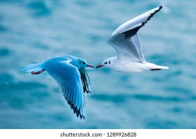Love concept.Seagulls flying over the Bosphorus,Istanbul,Turkey