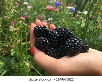 Love fresh blackberries