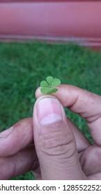 love green cloverleaf