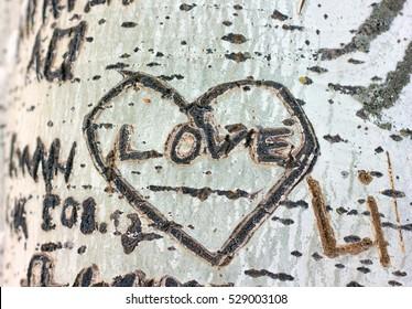 love heart carved on a tree bark