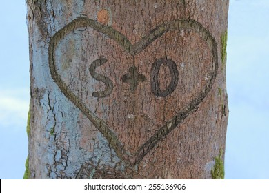 love heart with message in a tree bark