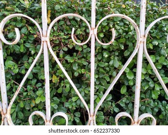 Love heart shaped iron fence (white color) over a lot of green leaf. (protect environment concept) - Take photo by smartphone.