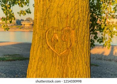 Love heart at tree