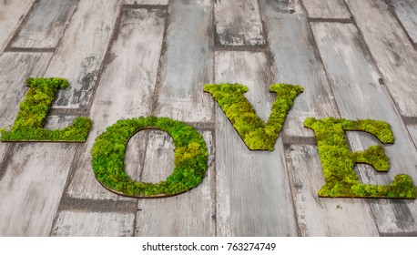 love inscription from natural green wood - moss