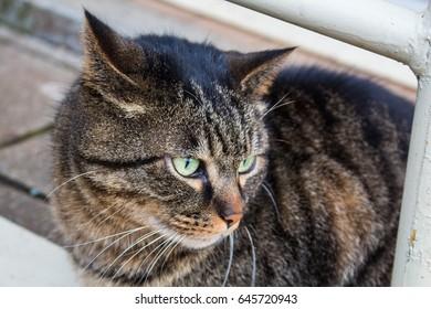 love ling cat.