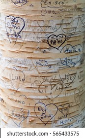 Love messages in the trees in Lover'?s Lane, Green Gables Heritage Place, home of the famous writer Lucy Maud Montgomery, author of Anne of Green Gables