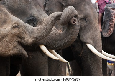 The love, relationship and communication between elephants
