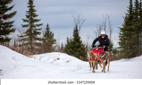 I love seeing the smiles on client's faces when getting them on the runners. There's no other winter Minnesota experience like dog sledding!