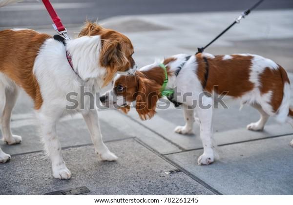love-story-two-dogs-600w-782261245.jpg