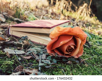 love theme - closed book with rose on the moss in the forest at sunset