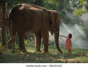 Love touch of children with elephants ,Surin,Thailand