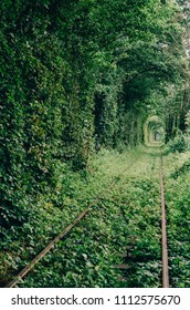 Love tunnel created from trees along the railway in Ukraine, Klevan.
