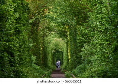 Love tunnel natural education from trees.