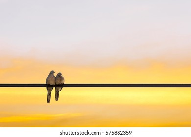 Love. Two doves on wire. Golden sky at sunset.