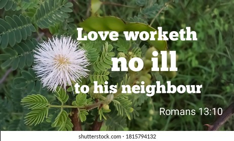 Love worketh no ill to his neighbour bible verse from romans 13:10 with grass flower and nature background. christian quote