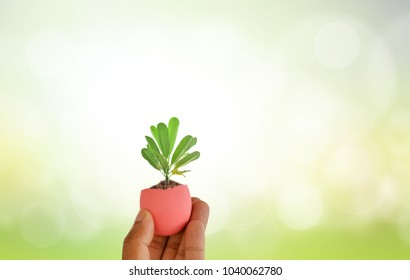 Love World Concept.Tree came out of the egg. in Human Hand