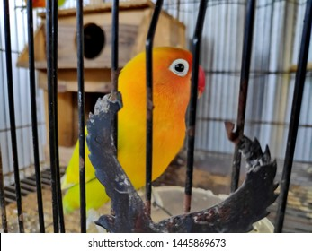A lovebird is the common name of Agapornis a small genus of parrot. Eight species are native to the African continent, with the grey-headed lovebird being native to Madagascar.