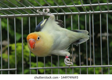 a lovebird with cute moment