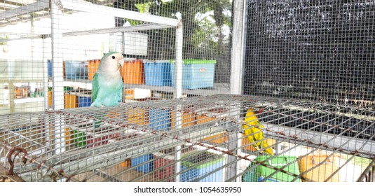 lovebird on a cage