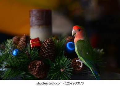 Lovebird parrot as New Year's decoration