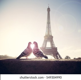 Lovebird silhouette on blurred eiffel tower background or valentine wedding card concept, Birds making heart shape by his heads