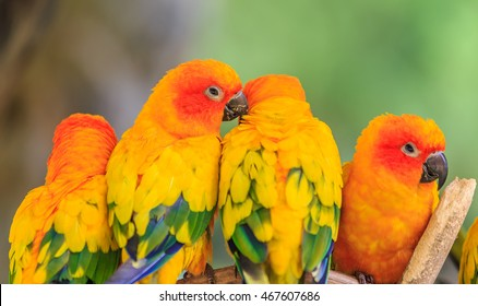 Colorful Bird Images Stock Photos Vectors