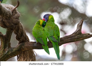 Lovebirds perched together on a branch