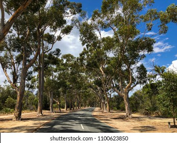 Lovekin drive, road with Sugar gum tree with plaques in front. One of Honor Avenues through Kings Park in Perth, Western Australia